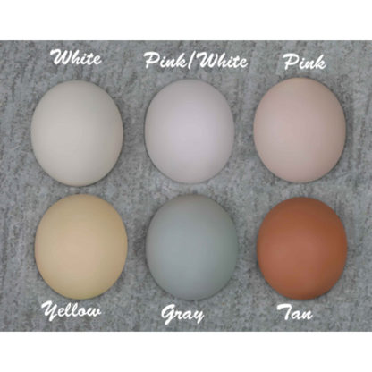 dollzone color chart