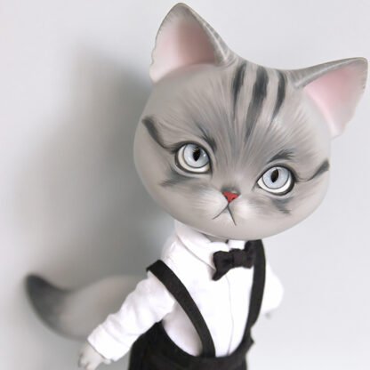pipos american short hair gray pang cat